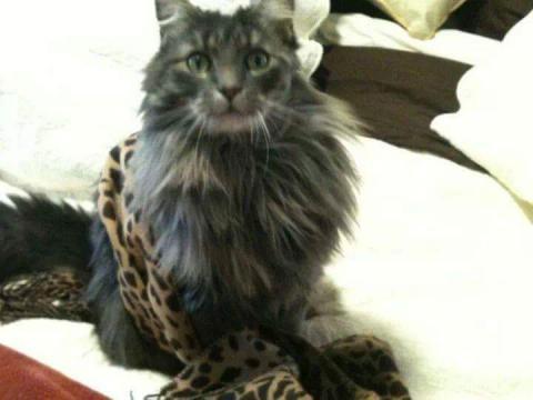 Cats For Adoption Clifton Park Ny